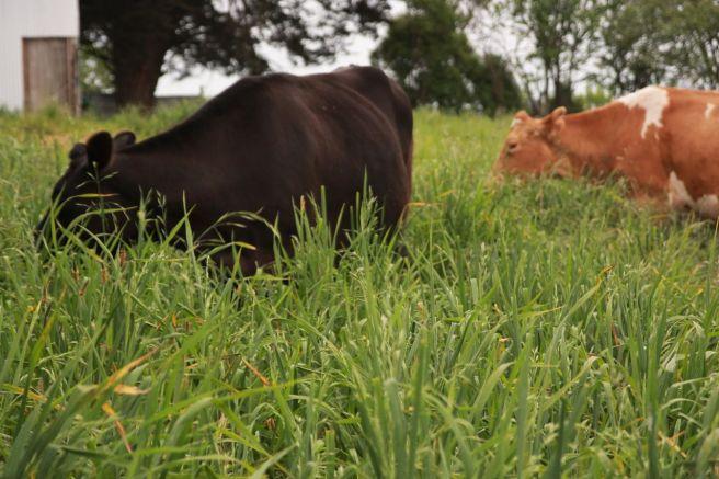 Grass06