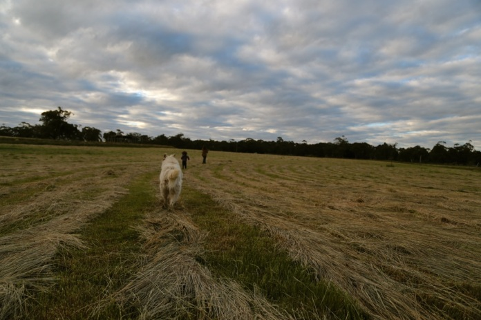 haycutting03