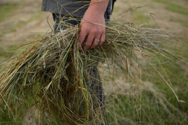 haycutting05